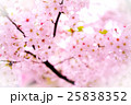 粉紅的櫻花 25838352