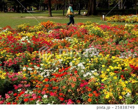 秋の公園花壇 25838749