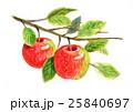 りんご 25840697