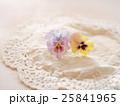 パンジー ビオラ 花の写真 25841965