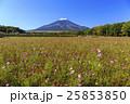 富士山 秋桜 25853850
