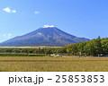 富士山 秋桜 25853853