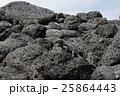 海イグアナ 爬虫類 動物の写真 25864443