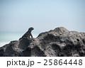 海イグアナ 爬虫類 動物の写真 25864448