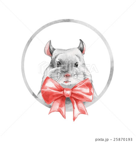 Chinchilla 1. Watercolor cute mouse. 25870193