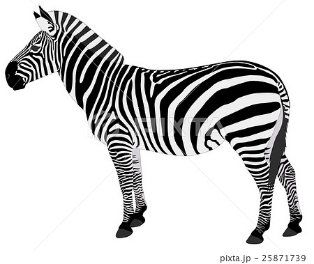 detailed illustration of zebra 25871739