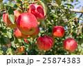 りんご 10月 25874383