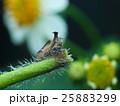 昆虫 虫 蟲の写真 25883299