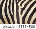 シマウマ 模様 25894580