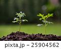 植物 ガーデニング グリーンの写真 25904562