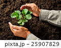 植物 ガーデニング 両手の写真 25907829