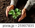 植物 ガーデニング 両手の写真 25907835