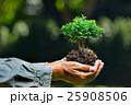 樹木 樹 ツリーの写真 25908506