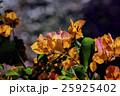 鮮やかなオレンジ色のブーゲンビレア 25925402