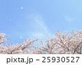 桜 桜吹雪 散るの写真 25930527