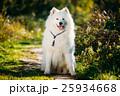 美しい 愛らしい ひょうきんの写真 25934668