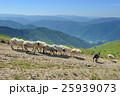 ひつじ ヒツジ 羊の写真 25939073