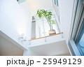 屋内 室内 観葉植物の写真 25949129