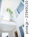 屋内 室内 観葉植物の写真 25949130
