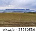 麦畑と十勝連峰(北海道) 25960530