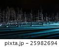 青い池 枯れ木 美瑛の写真 25982694