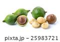 マカダミア ナッツ 種実類の写真 25983721
