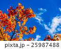 紅葉 青空 秋の写真 25987488
