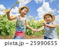 ひまわり畑で遊ぶ兄弟 25990655