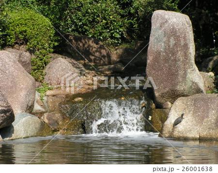 稲毛海浜公園の池の巨岩に亀さん 26001638