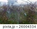 くも クモ スパイダーの写真 26004334