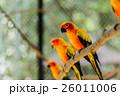 カラー 色 色彩の写真 26011006