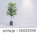 観葉植物 26020306