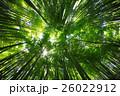 生い茂る竹林 26022912