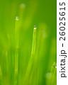 露 (24) 26025615