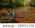 菊池渓谷 落ち葉 秋の写真 26031138