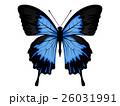 蝶02 26031991
