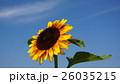 sunflower 26035215