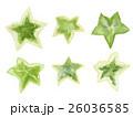 アイビーの葉っぱ 水彩イラスト 26036585