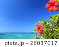 沖縄 海 ハイビスカスの写真 26037017