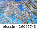 ブルー 青 青いの写真 26049743