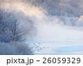 タンチョウ 丹頂鶴 川霧の写真 26059329