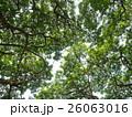 樹木 樹 ツリーの写真 26063016