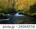 紅葉の奥入瀬渓流 26068556