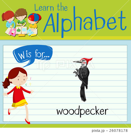 Flashcard alphabet W is for woodpeckerのイラスト素材 [26078178] - PIXTA