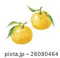 柚子 ユズ 26080464