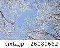 霧氷 26080662