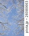 霧氷 26080663