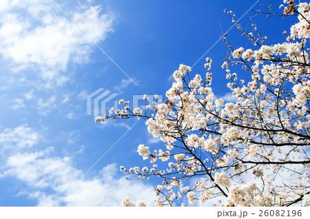 青空に咲く桜の花 26082196