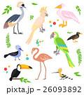 鳥 組み合わせ 異国風のイラスト 26093892