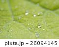 葉 きれい 綺麗の写真 26094145